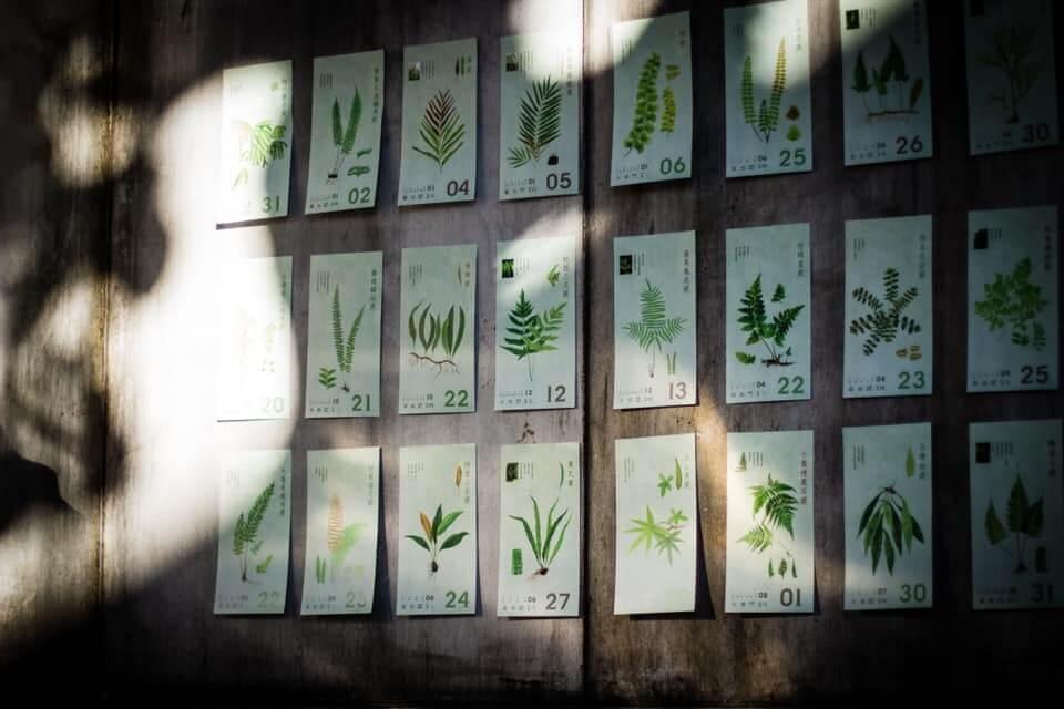 2020年的蕨曆,淡雅的綠為底色。每種蕨類,都有獨特的模樣。