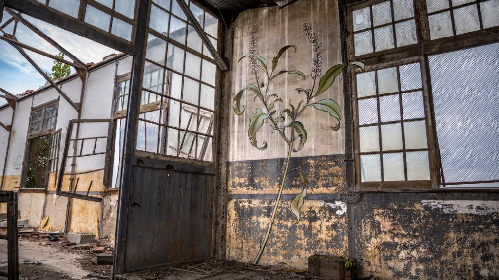 Mona繪畫的植物,開滿不同城市的角角落落。