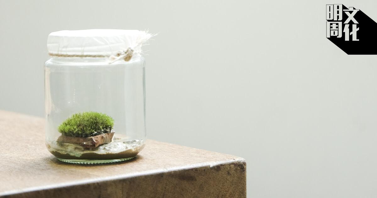 《陶瓦片青苔》把青苔及瓦片放在生態瓶內,反映大自然生境及荔枝窩的生命力。
