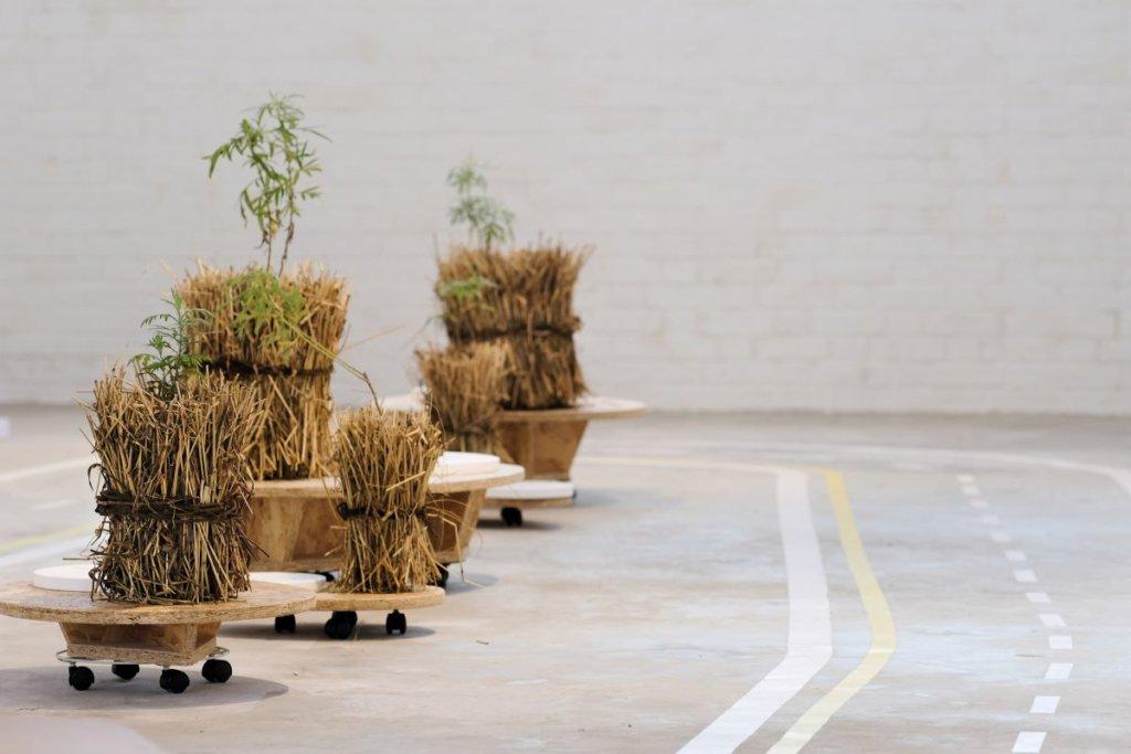 自古以來,不少人相信植物具有淨化氣場、驅除病邪的特質。