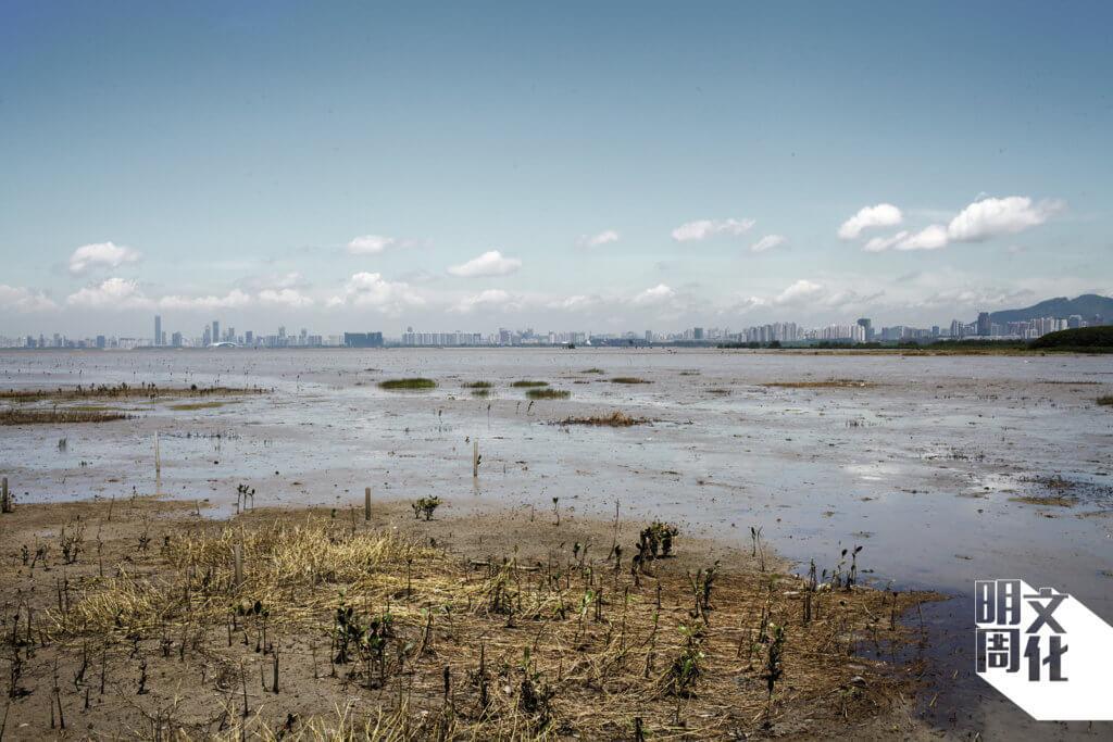 自四十年代開始,米埔后海灣濕地對遷徙候鳥的價值已廣為人知,該處的濕地共錄得逾400個鳥種( 包括候鳥和留鳥)。