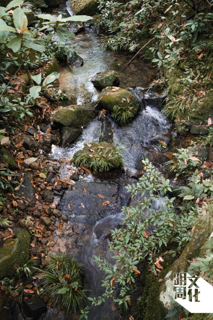 水壩轉角處的溪澗,也是吸引鳥類逗留的生境。