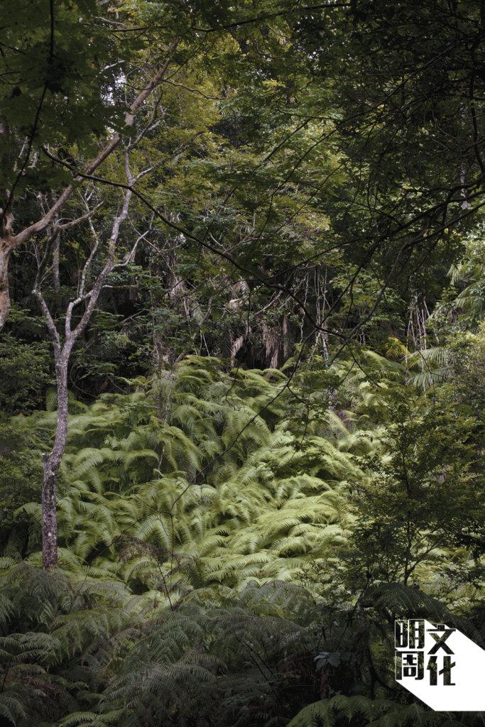 大埔滘為留鳥和遷徙的林鳥提供了理想的生境, 例如山蒼樹、榼藤子及楓香等。