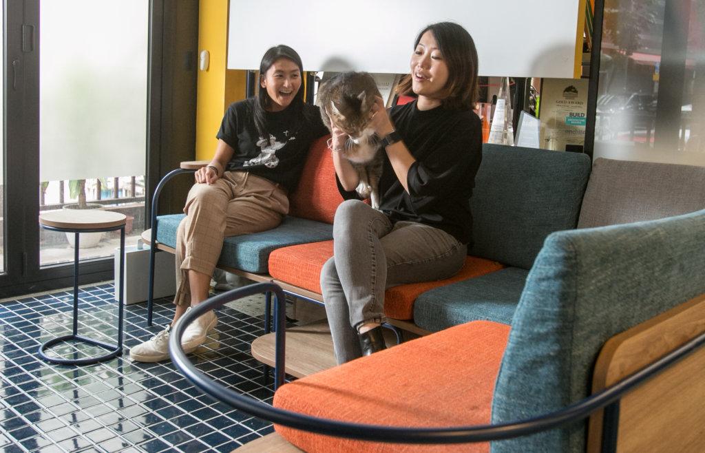 在訪問後,我們邀請了「Never Alone陪我」梳化其中一位用家,Sarah工作室內的貓經理George一同合照,可惜經理當日不太合作。
