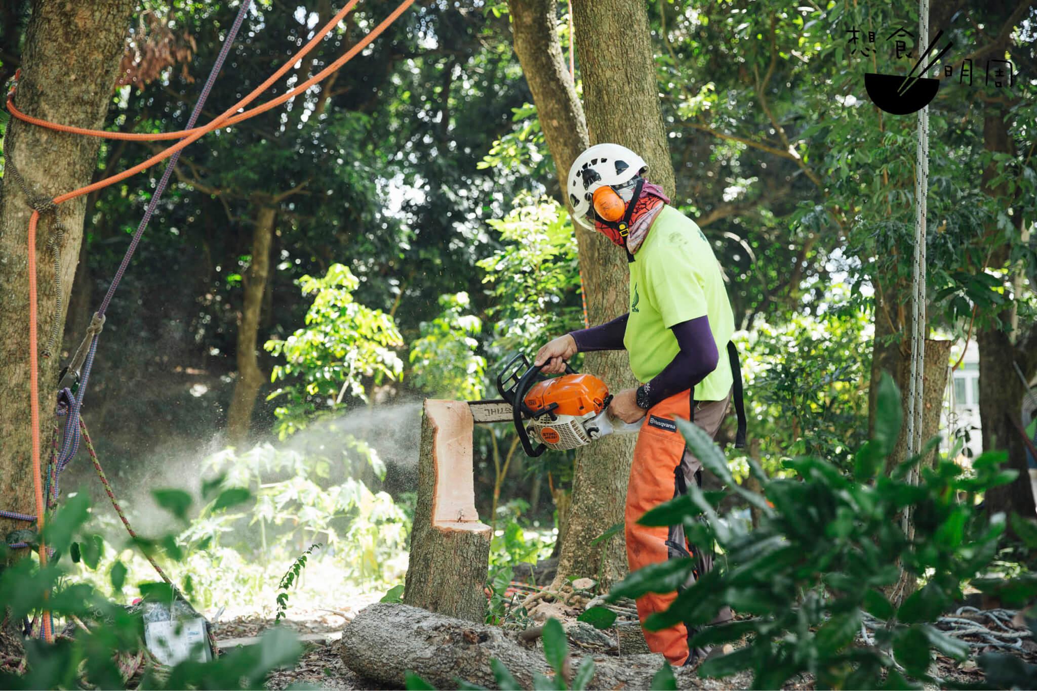 樹倒之後,留下樹頭,由樹藝師操刀修出木凳,成為龍眼樹生命的延續。
