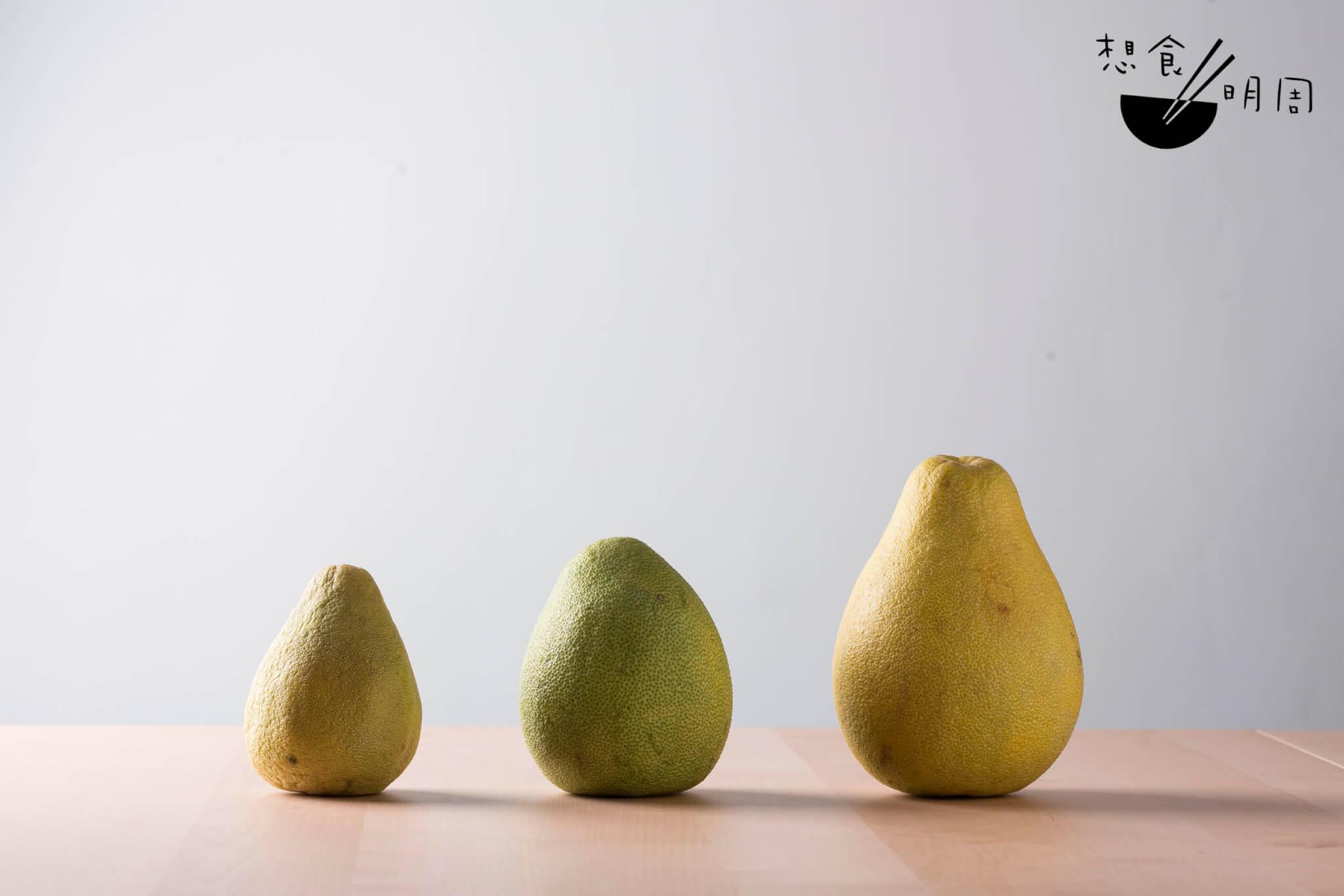 左:老樹文旦,黃色外皮代表已消水,可食用。 中:文旦,青綠外皮,需要再待一段時日。 右:文旦,個子較大,非老樹出產。
