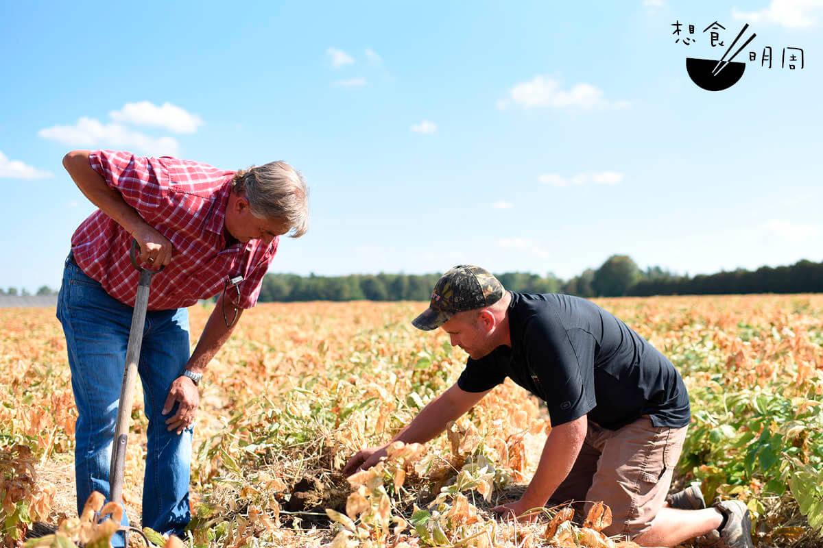 Douglas(左)跟家人Tom,在安大略省種參超過廿年,每到秋季他 們都要不停巡視耕地,查看西洋參的成長狀況,再決定會否採收。