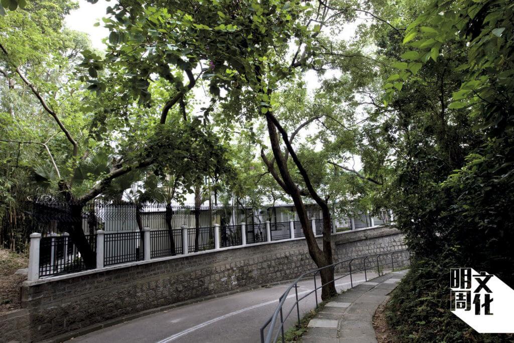 許多同學就是靠這條迂迴山路從亞皆老街步行回校。以前道路兩旁的樹木要比今天更茂密,可惜一次山泥傾瀉後部分山林已被護土牆替代。
