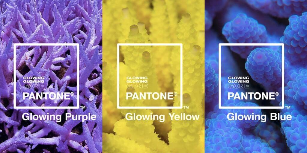 明耀顏色埋藏珊瑚的哭訴。