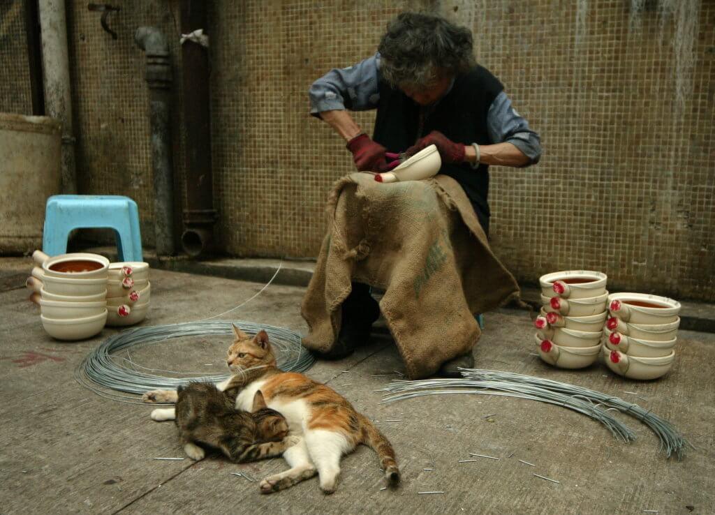 人與動物,都是社會公民。(圖片由葉漢華提供)