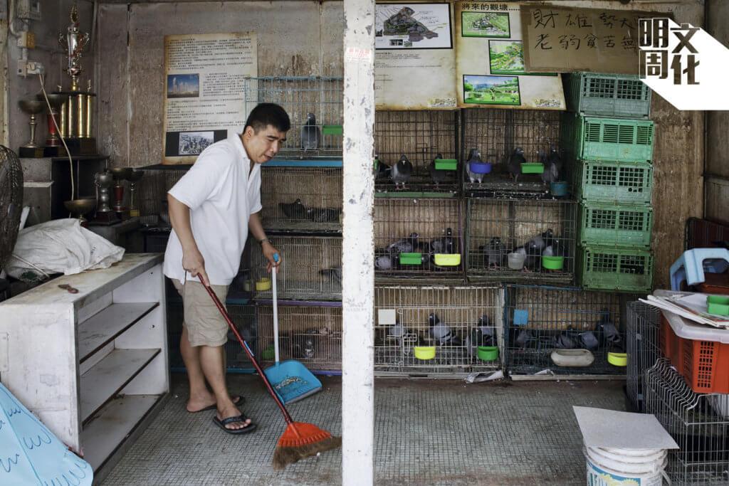 經營「賽鴿店」三十年,因為重建,生計被迫中止,培哥說從不知道自己是「霸佔官地」。留守的日子,每日依然打理得井井有條。