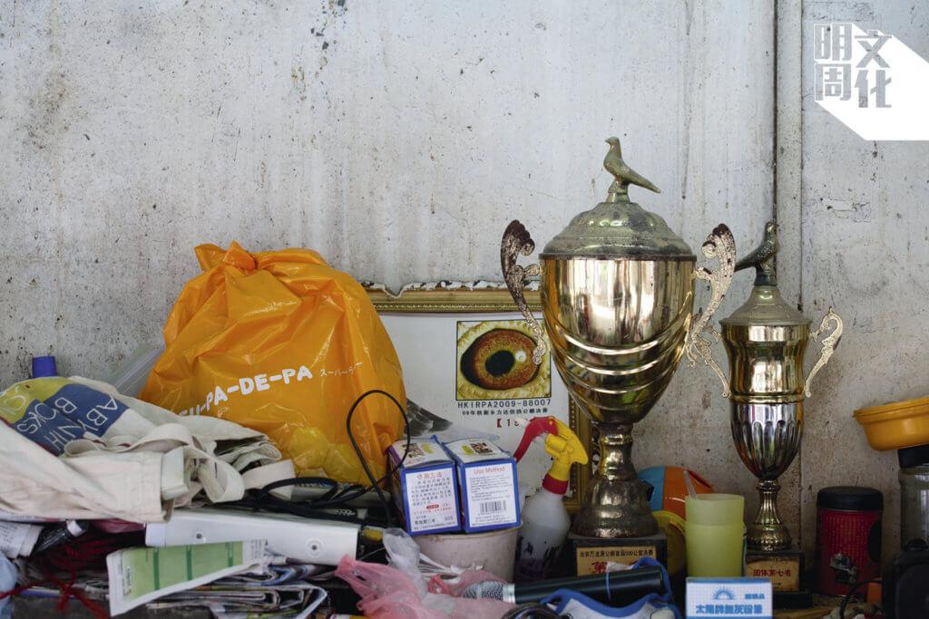 培哥訓練的賽鴿在全世界獲獎,獎盃多得放不下。