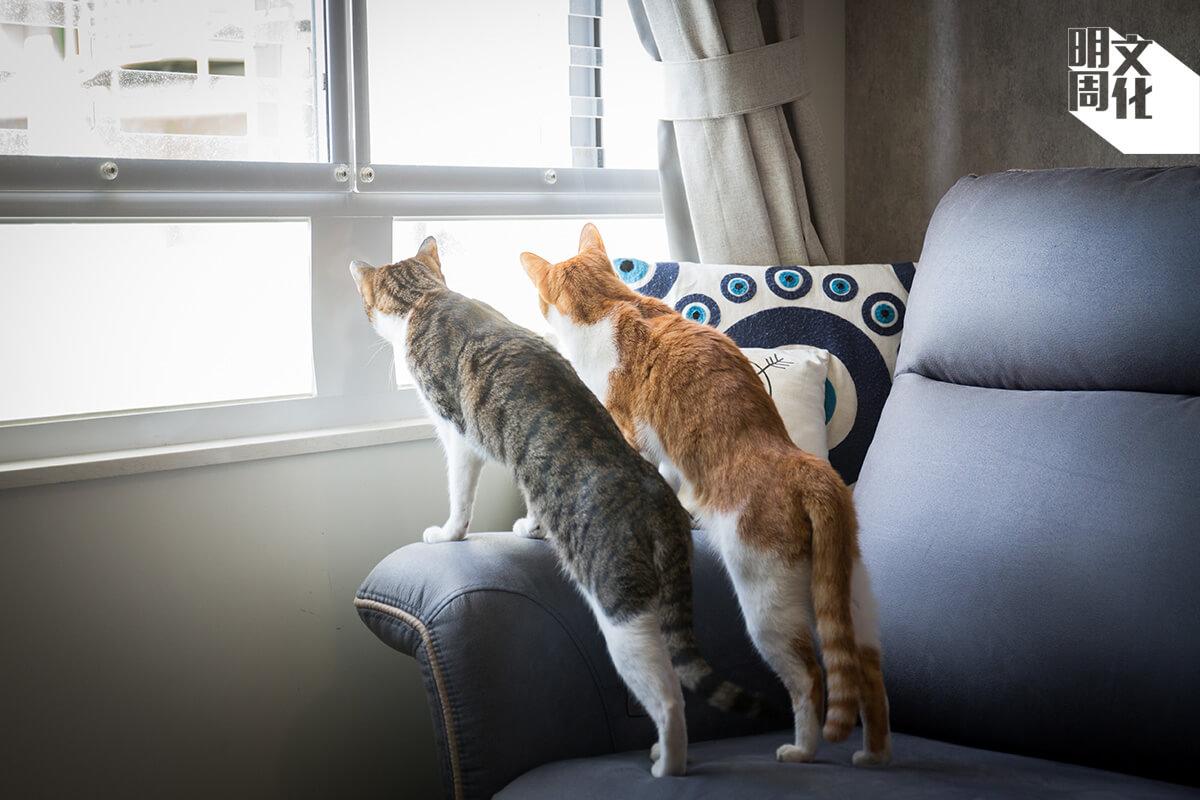兩隻貓咪好動八卦,時常爬上窗網,觀看駛過吐露港的船隻,或是以為自己可以捕捉飛過的雀鳥。