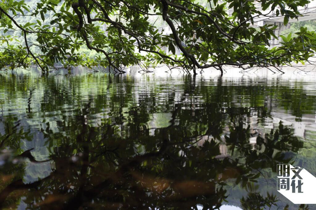 上到水霸,看到水中是一片綠色,倒影四邊樹木。