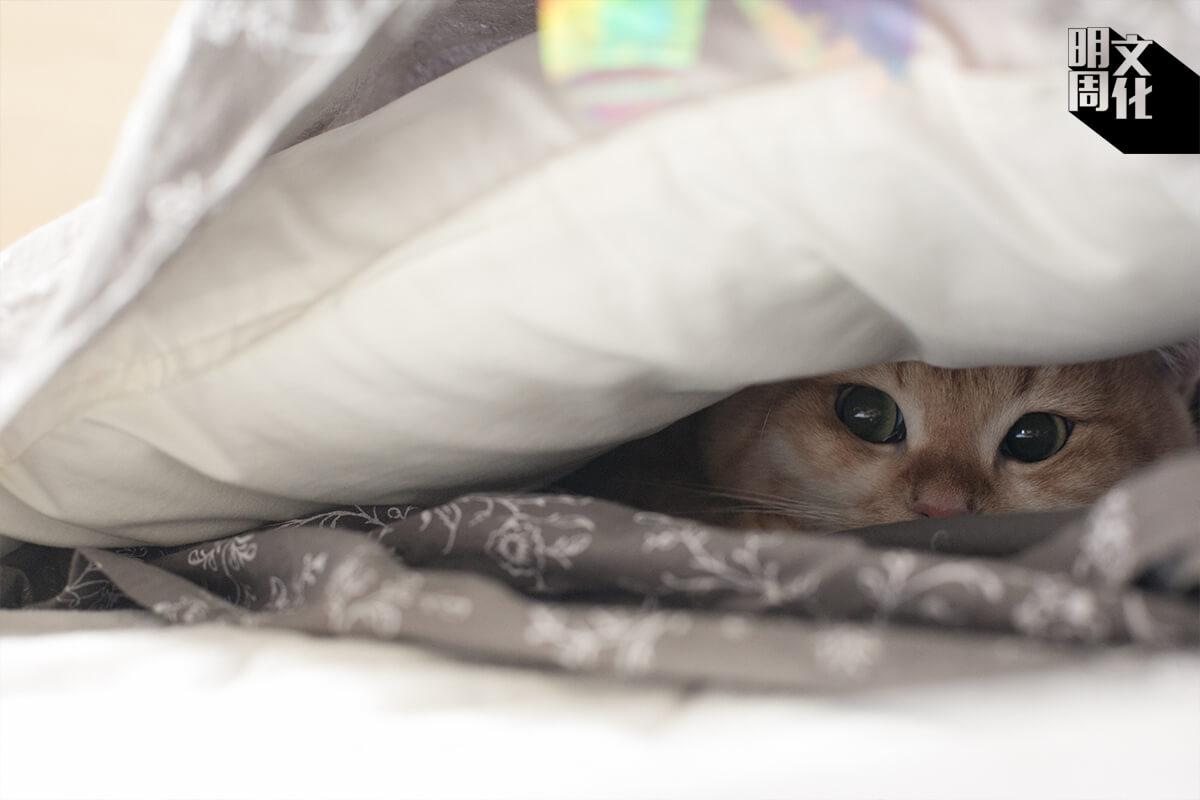 「喵,你能找到我嗎?」