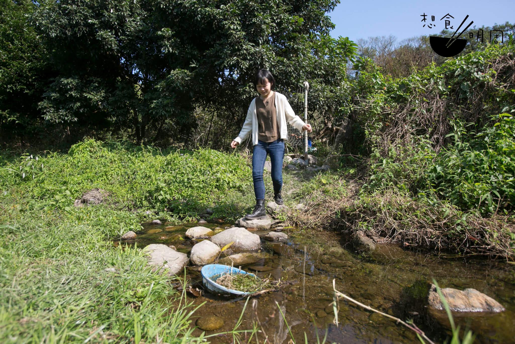 尋訪山檸柑的路途上,有一條淙淙小溪,清澈見底。