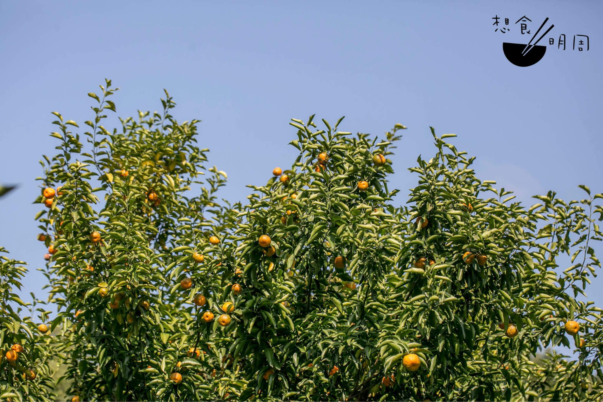 citruss4