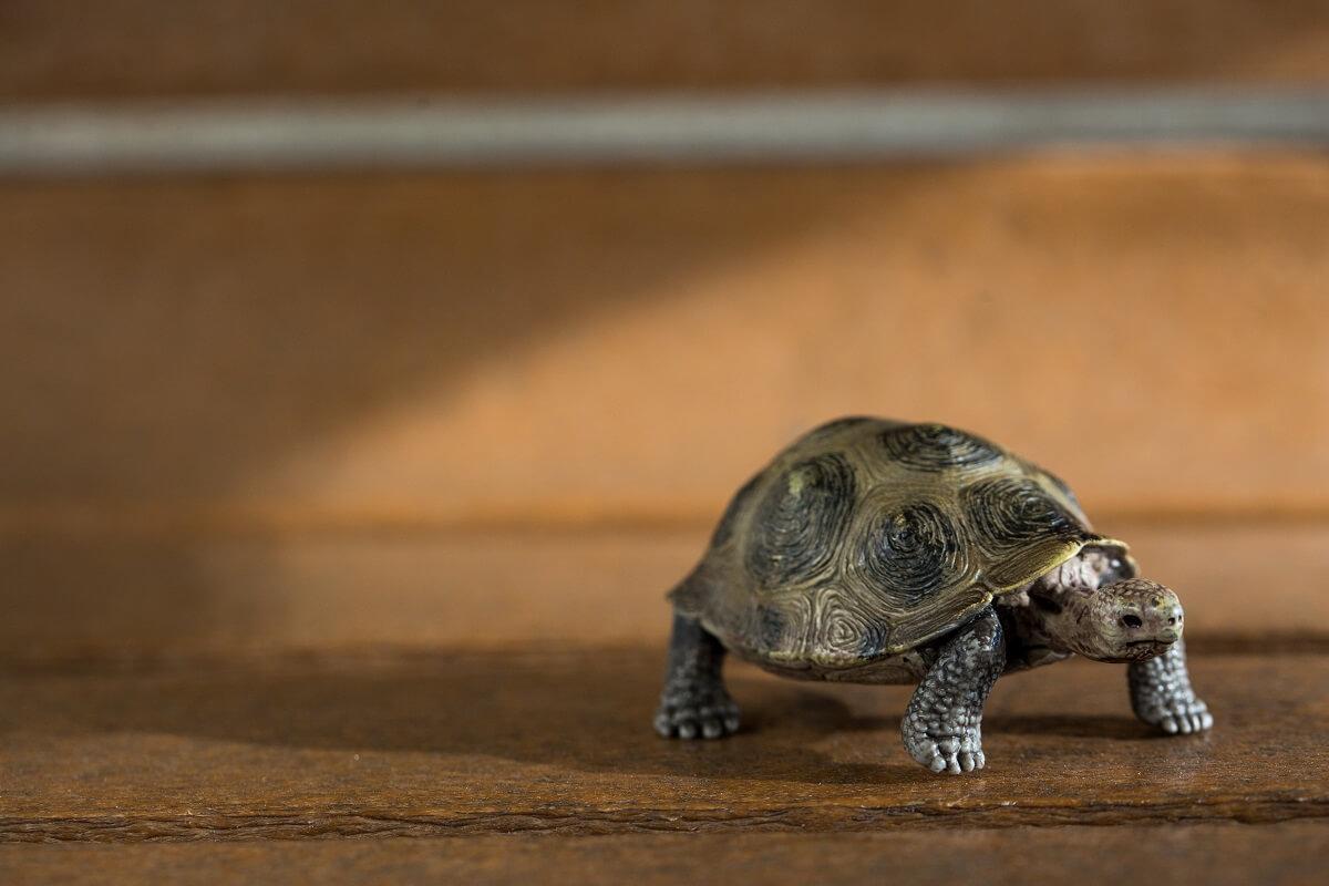 楊量傑做過最為人認識的報導,便是找五名動物傳心師,想他們幫記者找回了寵物小烏龜「布歐」。最後「布歐」原來是一隻廿二元人民幣淘寶購得的玩具龜,「布歐」因此一炮而紅。