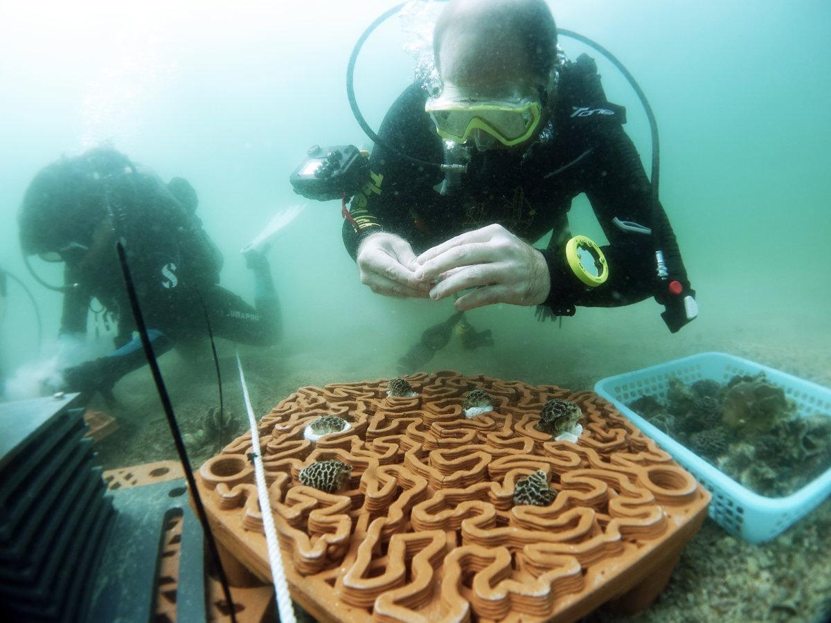 團隊去年把人工珊瑚礁盤放到水底,並持續監測進度。(圖片由漁農自然護理署提供)