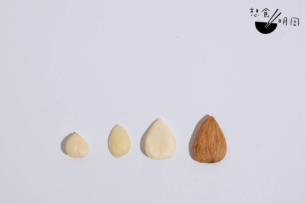 北杏、南杏、龍皇杏、美國杏仁(左至右)。這四款杏仁雖被稱之為「杏仁」,但品種、屬性、味道卻是大不同。