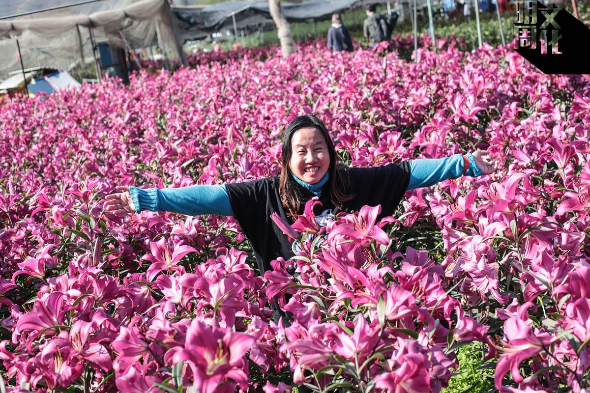紅粉緋緋的花海,吸引不少市民前來打卡。