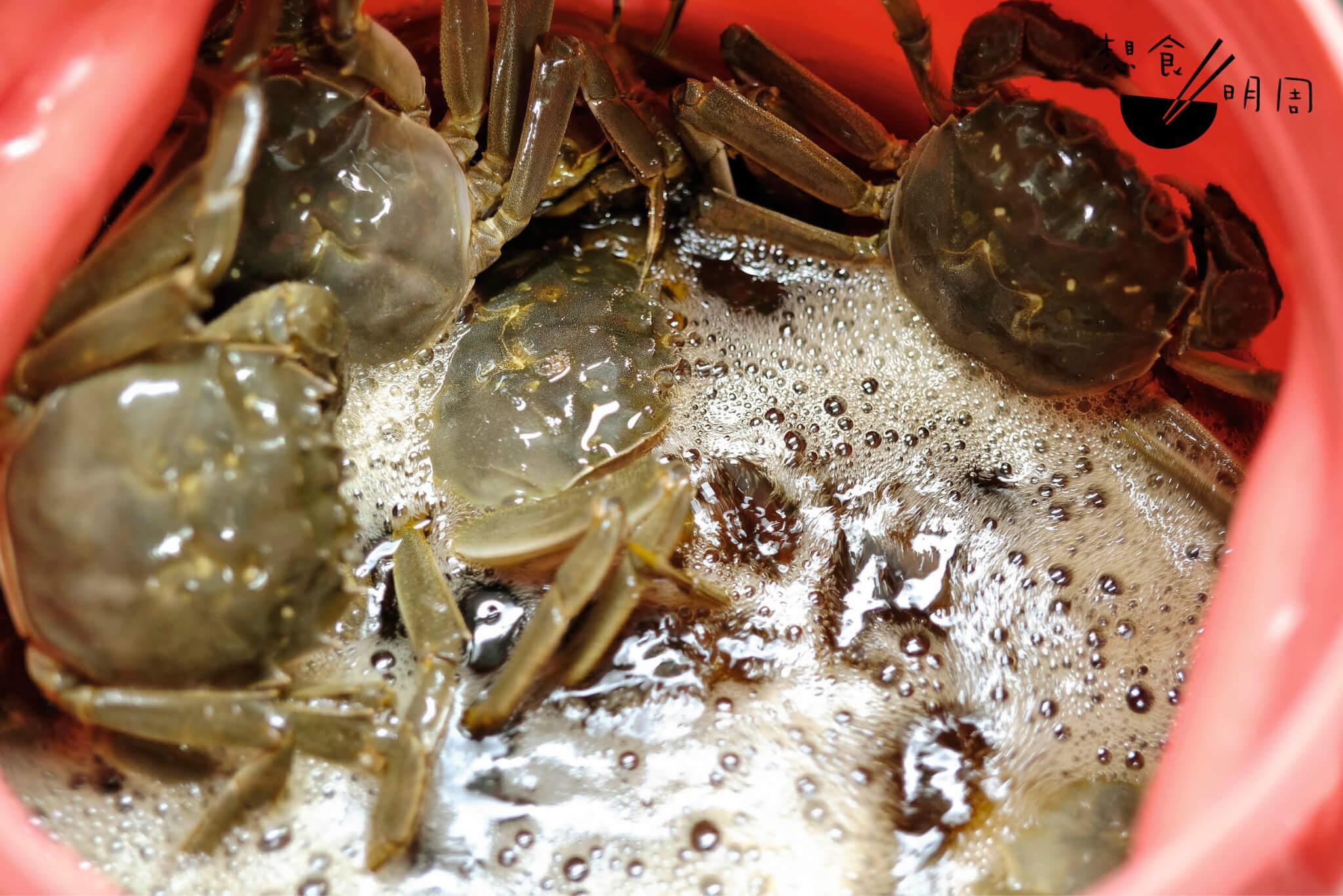 龍精虎猛的生蟹在濃濃黃酒中,醺暈、醉死, 跌蕩入迷醉酒鄉深處。兩日之後,折一蟹腳, 軟骨透明、與肉分離,便是「熟」了。