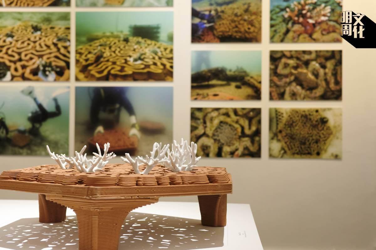 展覽有珊瑚礁盤的模型以及照片和影片解釋製作過程