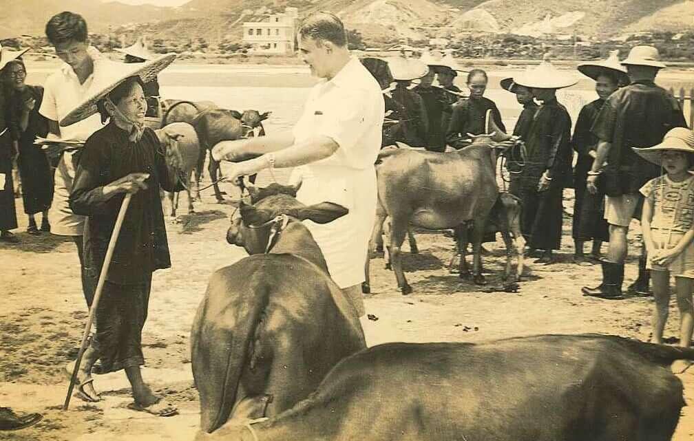 新界家戶以農業維生,圖為賀理士嘉道理爵士送贈牛隻。