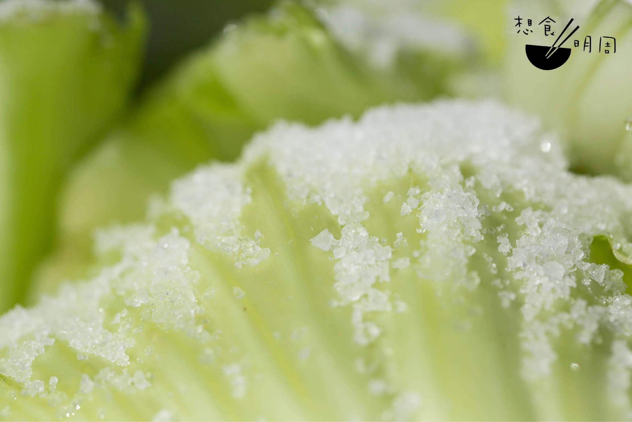 晶亮的粗鹽灑落在芥球上,使葉莖出水、 脫青。惟有水出夠了,才可以轉化成不老 梅菜,延長壽命至更多個春夏秋冬。