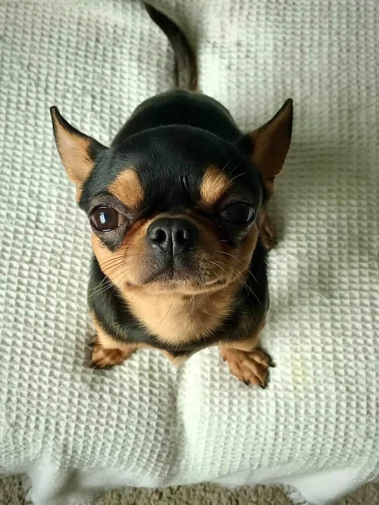 點解會有咁可愛的狗仔!