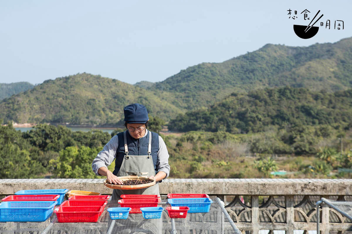 現時負責打理荔枝窩大部分咖啡樹的戚曉麗(Katie),是香港大學公民社會與治理研究中心策動永續發展坊高級項目經理。為了復村,她決意發起復耕,並因此與咖啡結緣。