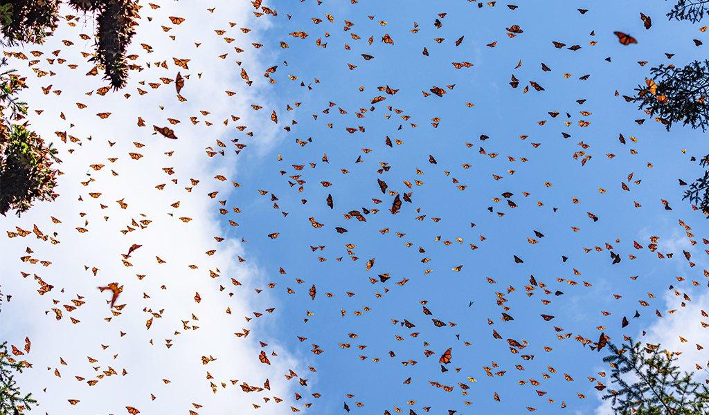 060520_butterflies_6_2048x2048
