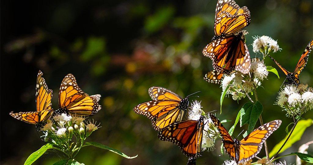 060520_butterflies_1_503599ac-d86f-4ace-9ba5-08c33636ceeb_2048x2048
