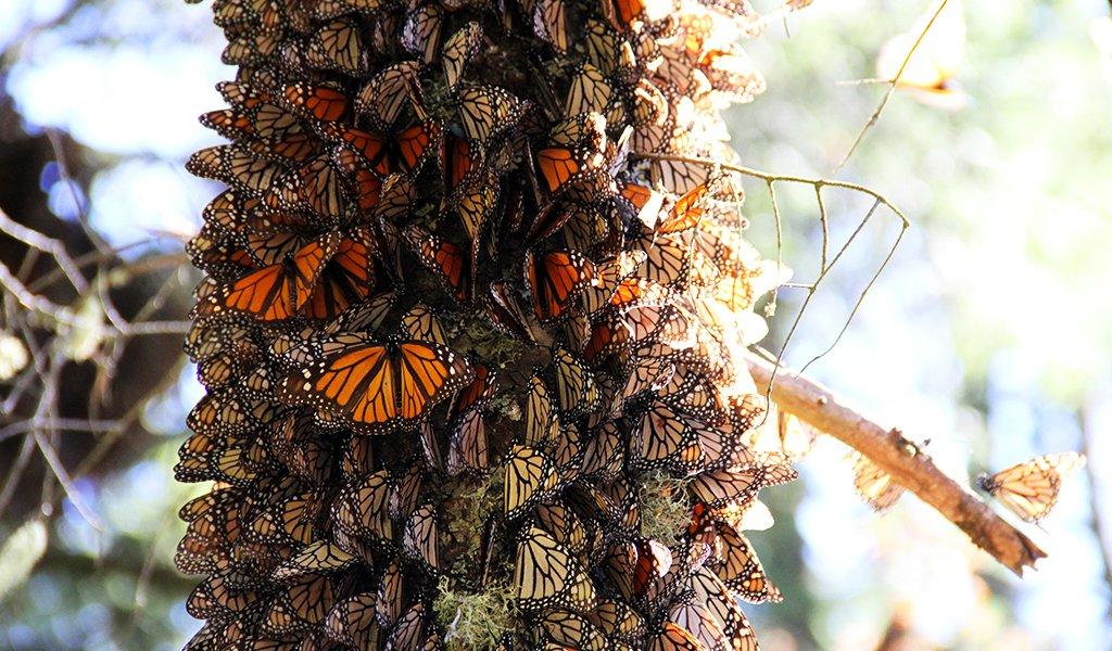 060520_butterflies_3_ca4a4086-111f-44ab-b545-a68215767d5a_2048x2048