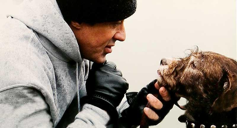 rocky-balboa-punchy-dog-terrier