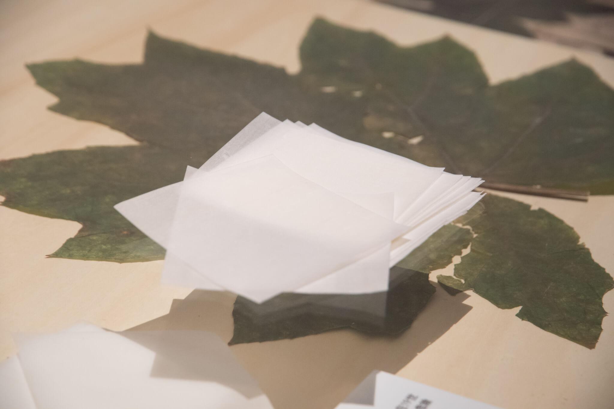 蓪草標本與蓪草紙