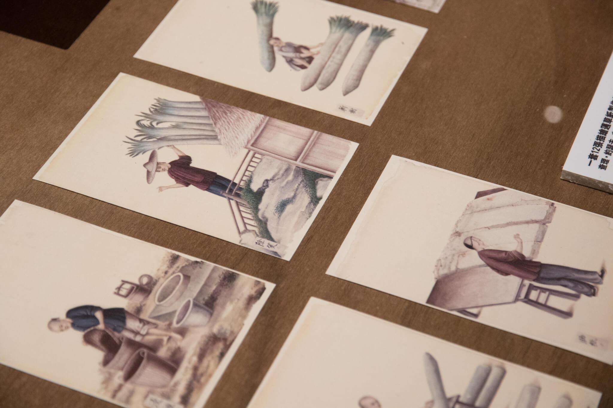 舊的畫作中紀錄了製作蓪草紙的過程