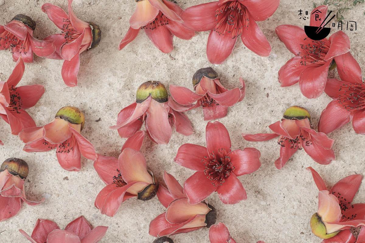 可曾想像:春天掉在腳邊的木棉花,吃起來是什麼味道?