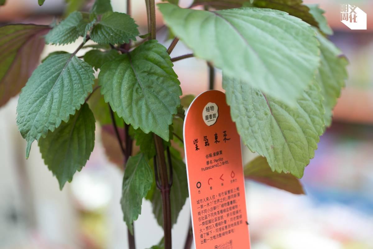 設計師特意給每棵植物一塊名牌,照顧植物就像照顧一個人一樣。
