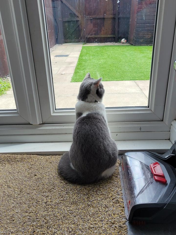 貓到了英國之後,起初不吃不喝,後來才慢慢熟悉當地環境,現在正享受與主人的居英生活。