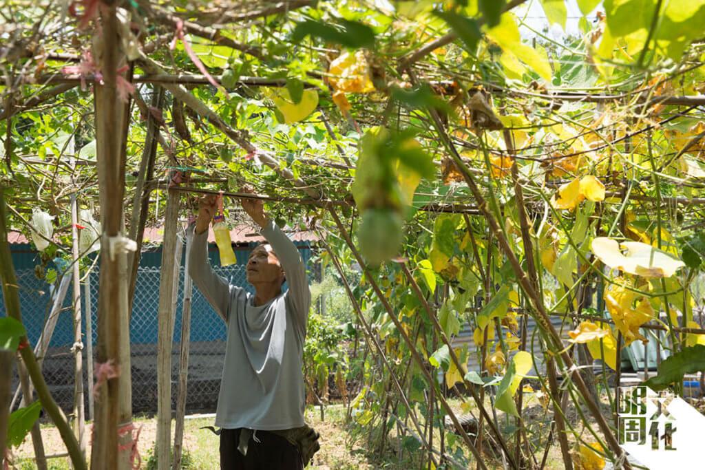 在文哥心目中,本土農業是傳承。