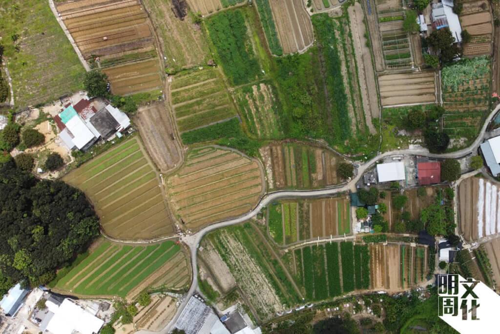 本來農田間的小路順應農田的形狀發展,也便利水流方向。