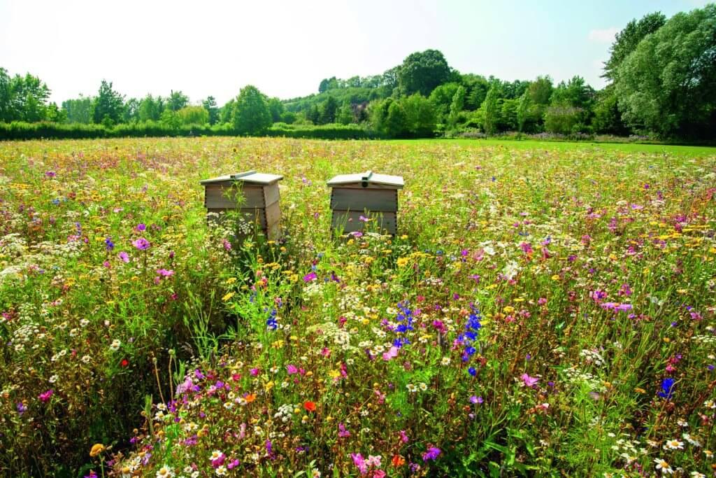 guerlain_10_bee-stories_bee-forage-plants