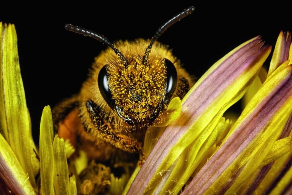 guerlain_7_bee-stories_endangered-species