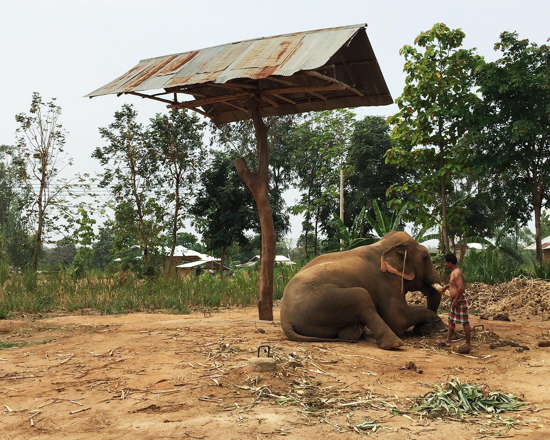 泰國村莊的「大象之家」