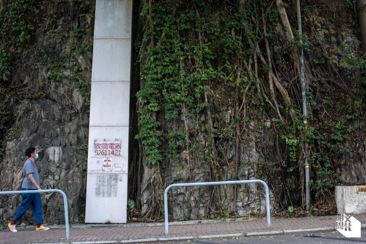 藝術家鄺永嘉熱愛植物,喜歡沿堅尼地道由灣仔散步到香港公園。