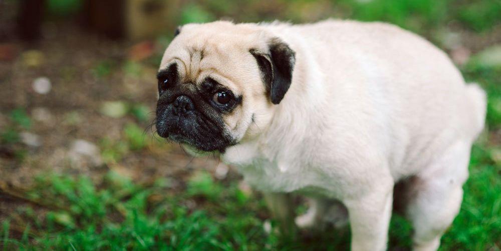 dogpoop-main-1518566341