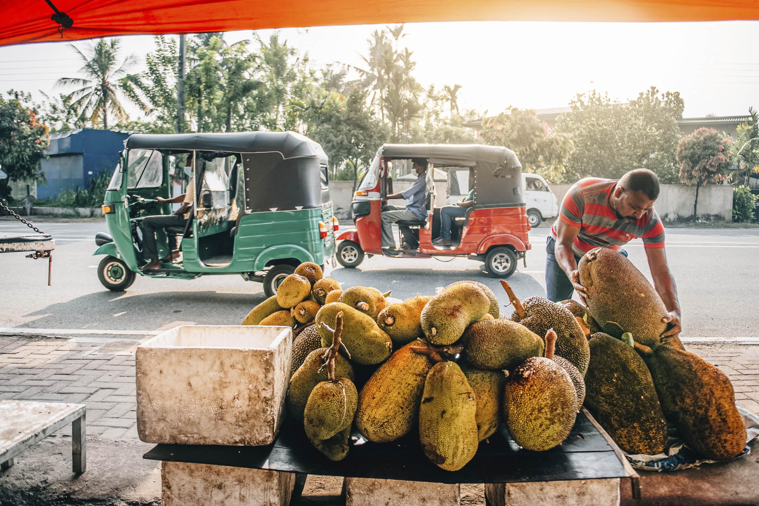 斯里蘭卡是盛產大樹菠蘿的國度,由剖皮、取肉,乃至烹煮大核,都是當地人的拿手本領。
