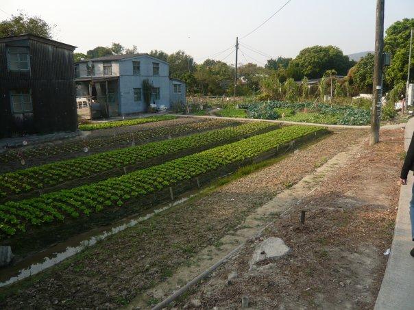 阿嘉在馬屎埔長大,自小便接觸大自然和種植。