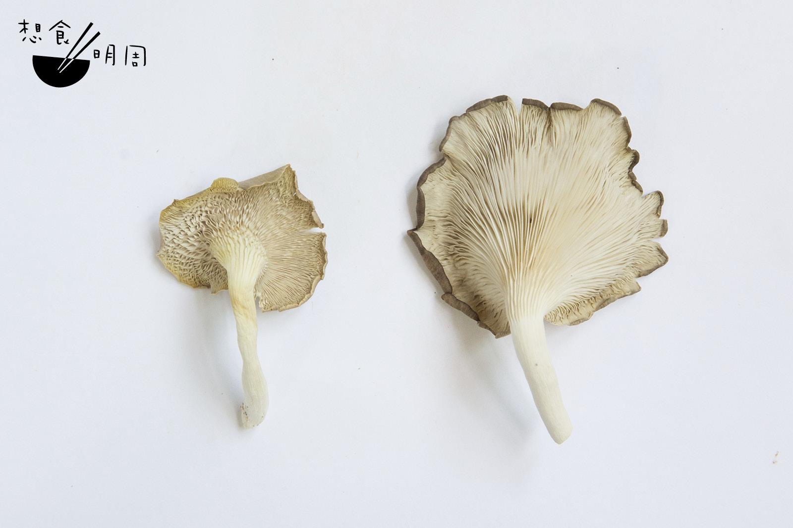 Russell提醒,大家在選購菇類時要多觀察菇菌的鰓位,即是菇的背後、釋放孢子的菇褶位置。一些不新鮮的菇會偏淋易散,而且菇褶會變黃,那就不要選購了!